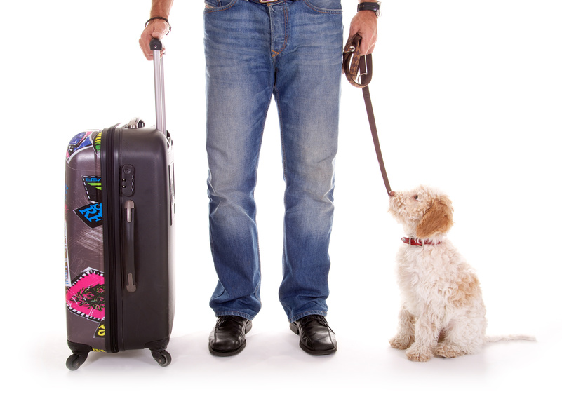 Pet Travel Scheme (PETS)