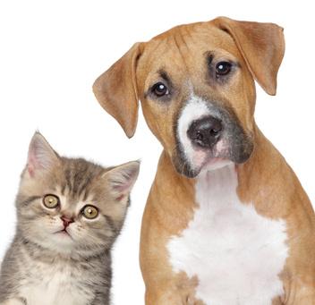 Pet Travel Scheme (PETS)